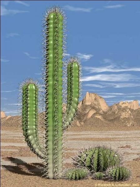 Quelle est cette plante qui évoque le désert mexicain, et chantée par Jacques Dutronc ?