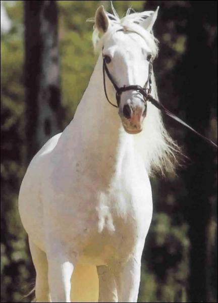On dit d'un cheval castré qu'il est