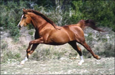 Quelle est l'allure la plus rapide à cheval ?