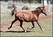 Quels sont les accessoires indispensables pour monter à cheval ?