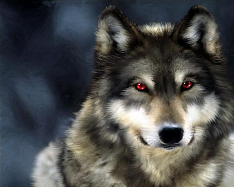 Comment dit-on loup ?