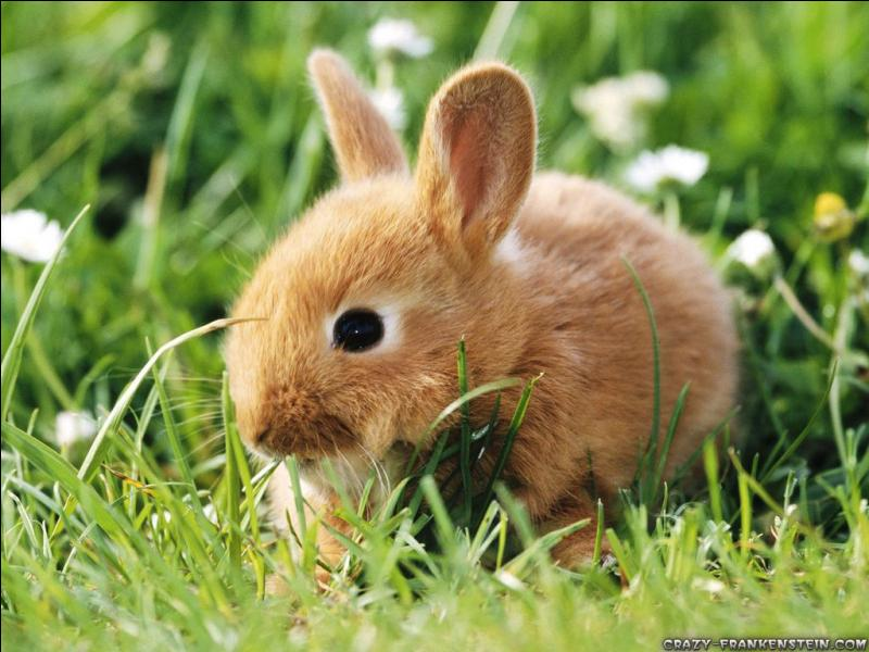 Comment dit-on lapin ?