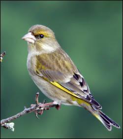 Comment dit-on oiseau ?