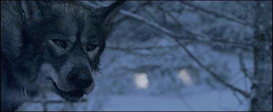 Quel est le nom du loup de la sorcière ?