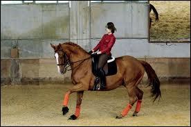 De l'arrêt, pour faire galoper mon cheval, il me suffit de placer mes aides.