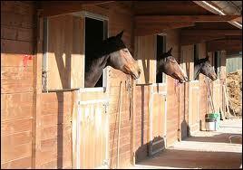 La litière du cheval peut être composée de copeaux de bois.