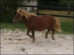Les poneys ne peuvent pas être ferrés.