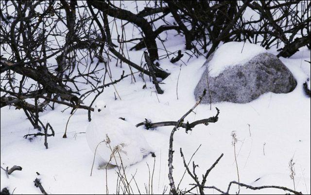 Il est petit le bonhomme de neige !