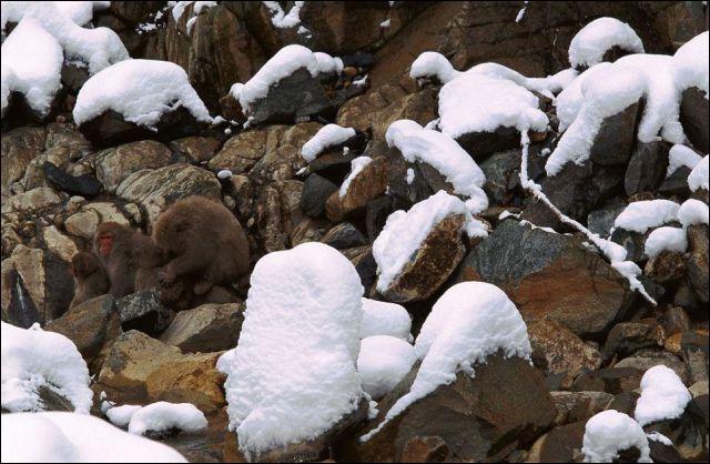 Pauvres ours, ils n'ont plus de grotte !