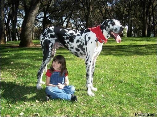 A quel jeu de cartes pensez-vous en regardant l'animal de la photo ?