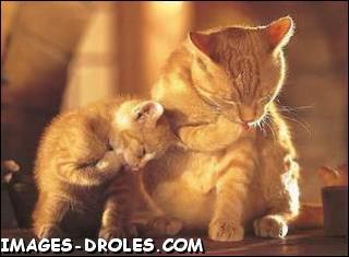Quizz chat part dans tous les sens 9 armageddon quiz humour - Les chiens ne font pas des chats ...