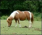 Dans la nature, le cheval mange trois fois par jour, à heures fixes.