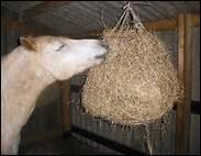 A l'écurie, le cheval a besoin de foin.