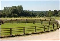 Un cheval est plus heureux quand il a la possibilité d'aller au paddock tous les jours.