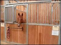 Au box, le cheval ne s'ennuie jamais.