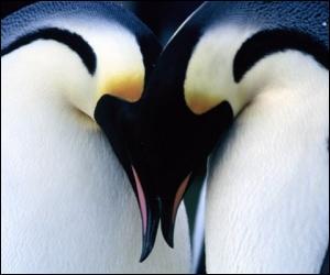 Il existe un clip pour  Penguins  :