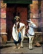 Saïs et son âne.
