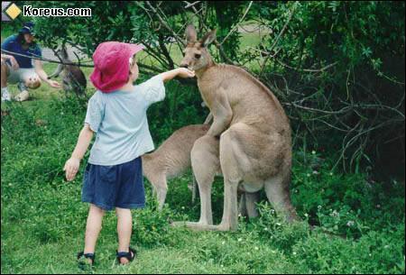 Sur cette question nous allons parler de l'être humain, qui, ne l'oublions pas, est un primate : En Australie une loi autorise une personne à avoir une relation sexuelle avec un kangourou à condition ...