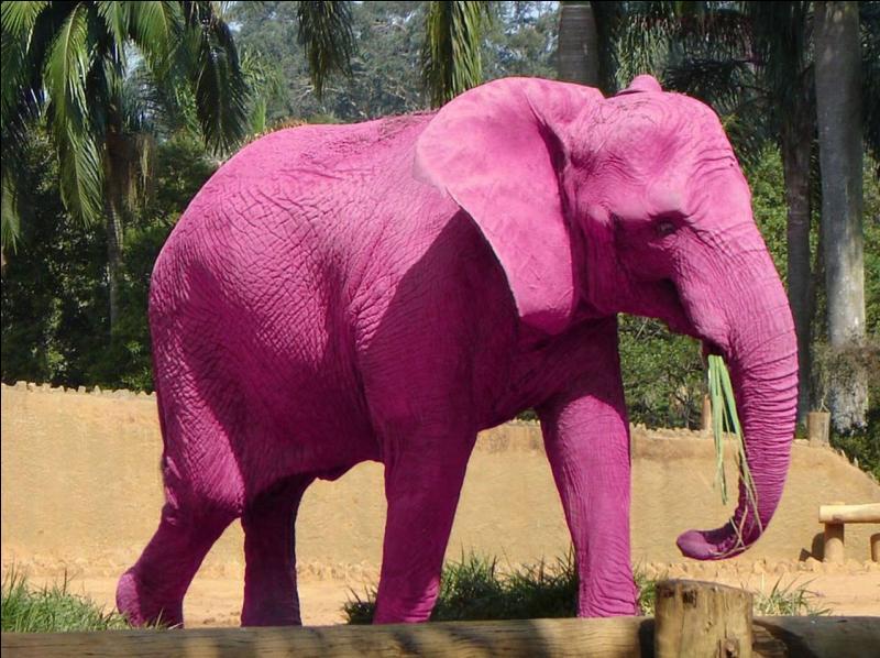 Si quelqu'un vous dit  I'm seeing pink elephants , quelle réaction est la plus appropriée de votre part ?
