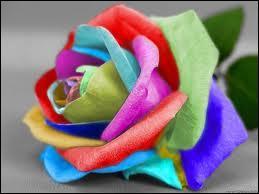 Comment dit-on  multicolore  en anglais ?