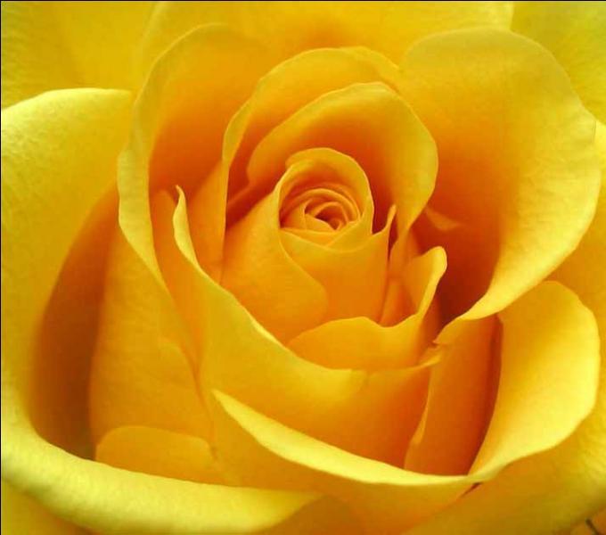 Comment dit-on  jaune  en anglais ?