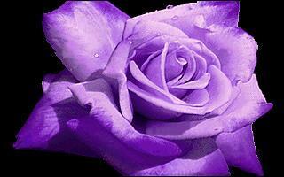 Comment dit-on  violet  en anglais ?