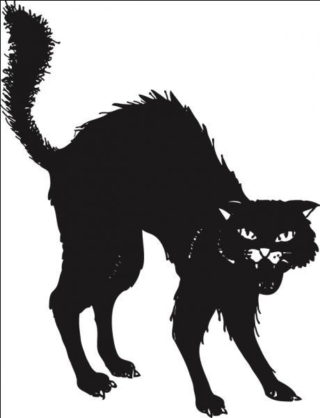 Que fait une poule quand elle rencontre un chat noir la nuit ?