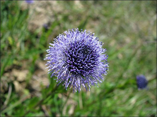 Comment s'appelle cette très jolie fleur au nom curieux ?