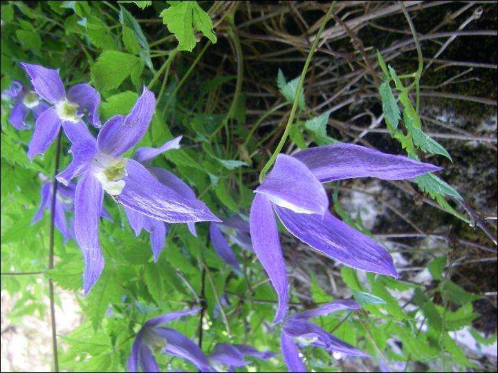 Quelle est cette fleur assez connue ?