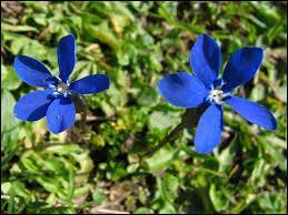 Comment s'appelle cette très jolie fleur, drès, drès cholie, ach ?