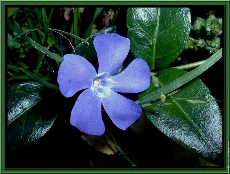 Quel est le nom de cette fleur délicate ?
