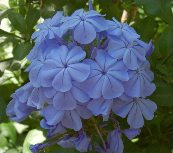 Quelle est cette fleur, dont le nom pourrait presque faire penser à un tour de reins ?