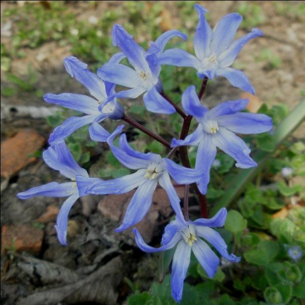Quel est le nom composé de cette fleur ?