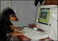 Il y a un bug, l'ordinateur se plante ! C'est un film où le personnage principal, Elzear Bouffier, un berger, veut planter des arbres dans une région déserte :