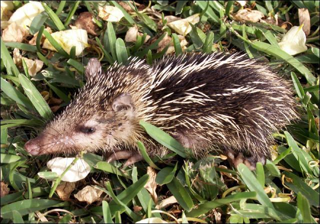 Comment s'appelle cet animal à la Réunion?