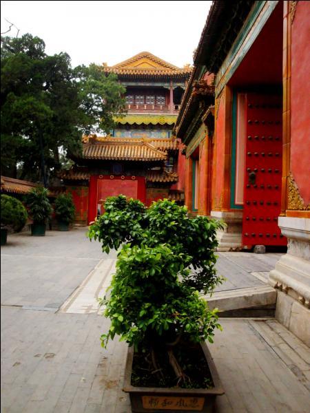 Sous Kângxî, la Chine revient à la paix civile et la cour devient le centre des arts et des lettres. Plus tard, Qianlong réorganise l'armée et :