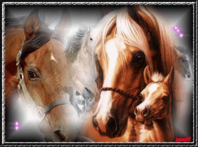 Comment s'appelle la longue marque blanche sur la face du cheval ?