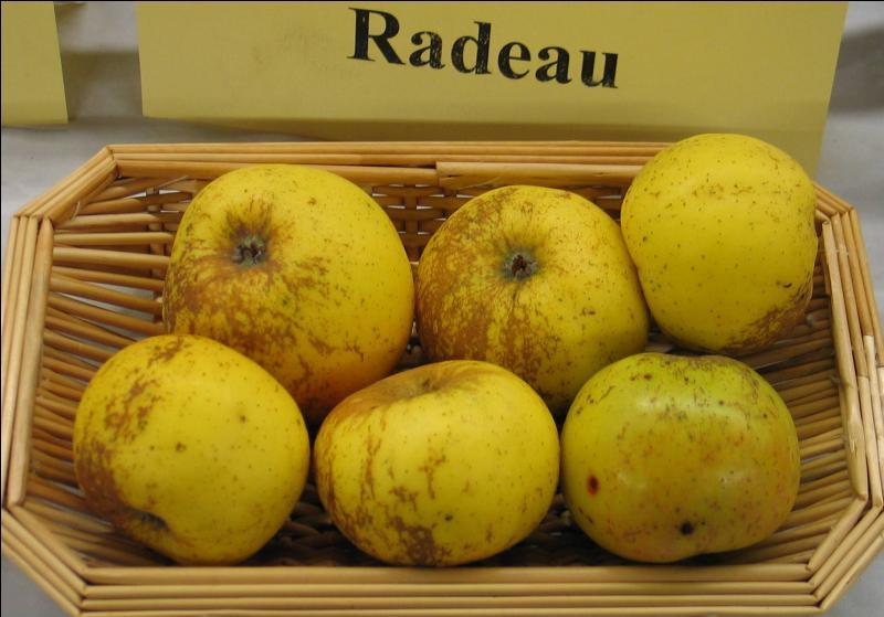 La pomme  radeau/radot  est de la variété des :