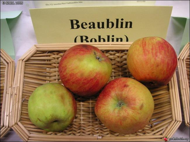 L'aire de répartition de la pomme à couteau  Beaublin  se trouve au nord-ouest de Rennes. Quel en est le département ?