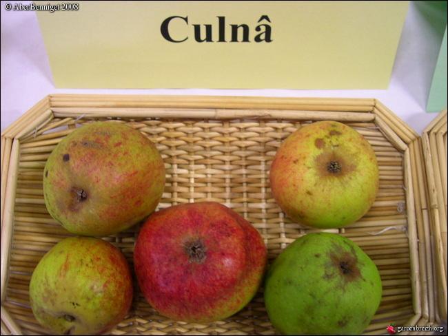 Où se situe le canton de Broons, territoire sur lequel vous récolterez des pommes  Culnâ  ? C'est une variété très résistante qui lui valut d'être expédiée à Paris par wagon.