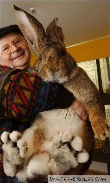 Quelle est l'espérance de vie du lapin domestique ?