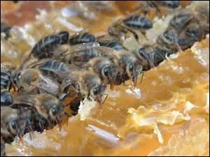 En quantités de grains de pollen, une abeille transporte environ, sur une seule de ses pattes postérieures :