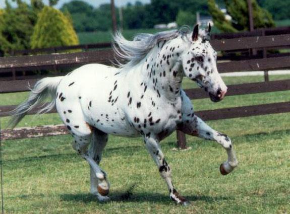 Es-tu incollable sur les chevaux ?