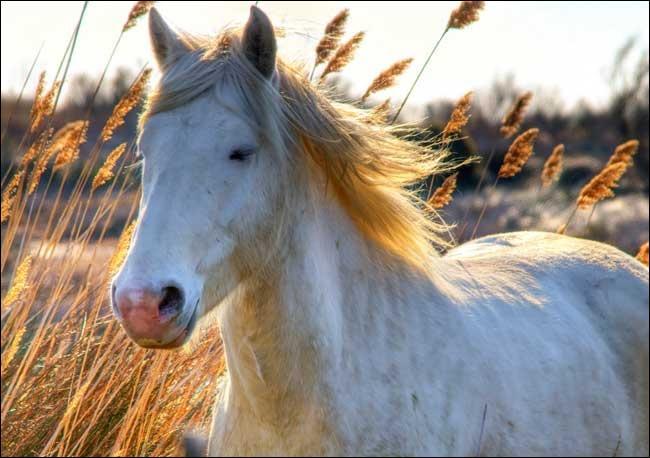 Et ce petit cheval blanc ?