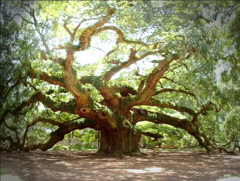 Les arbres, en anglais