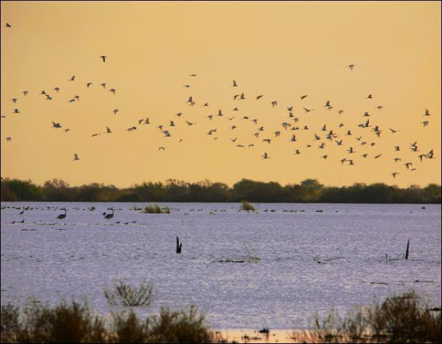 Le voyage ne s'arrête pas là ! Passons maintenant au parc national des oiseaux du _______ au ________ :