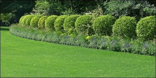"""En botanique, lequel de ces mots correspond à la définition suivante : """"Désigne une plante ligneuse d'une taille inférieure à 8 m et à tronc marqué"""" ?"""