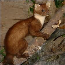 Elle vit en forêt aussi mais est plus grande que les autres. Qui est-ce ?