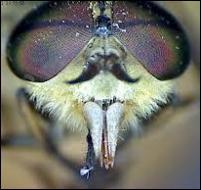 Quels insectes entrèrent en grand nombre dans tout le pays d'Egypte ?