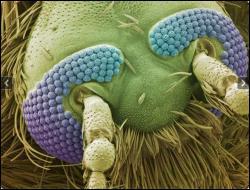 En quels insectes la poussière du sol se changea-t-elle ?